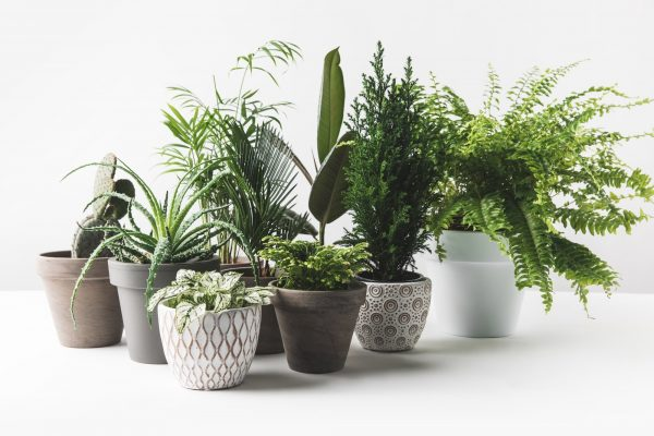Indoor Plants for Health and Thoughts