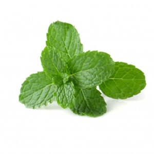 Mint in Summer Time